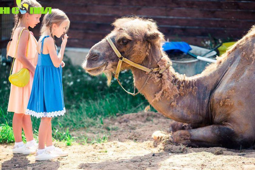 Tham quan Vườn thú baby (Kid zoo) - VINPEARL SAFARI PHÚ QUỐC