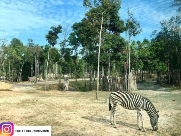 Ngua van _ Combo Vinpearl Land & Safari