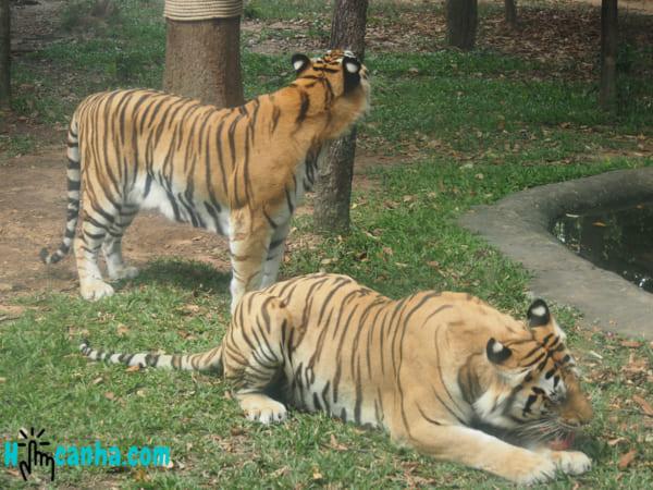 P3152021 _ Vé Tham Quan Vinpearl Safari Phú Quốc