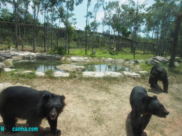 P3152164 _ Vé Tham Quan Vinpearl Safari Phú Quốc