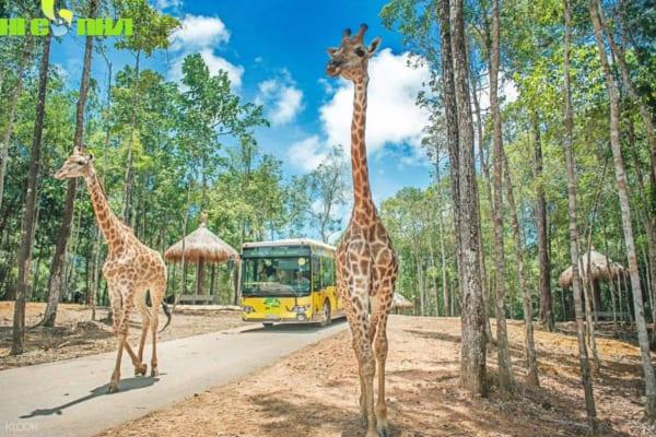 tham quan bang xe bus safari e1592797734509 _ VÉ VINPEARL SAFARI PHÚ QUỐC