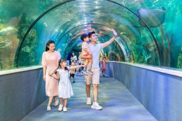 vinpearl aquarium times city hanoi hicanha _ Thủy Cung Vinpearl – Vinpearl Aquarium Times City Hà Nội