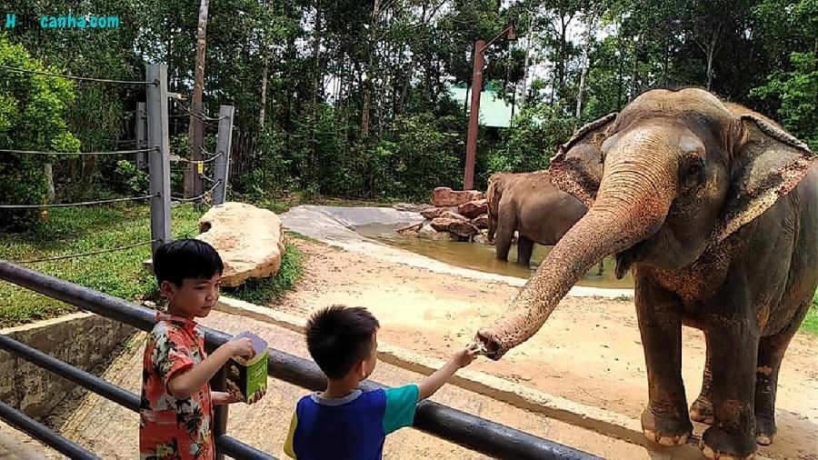 Vườn thú Safari Phú quốc Ở Đâu?